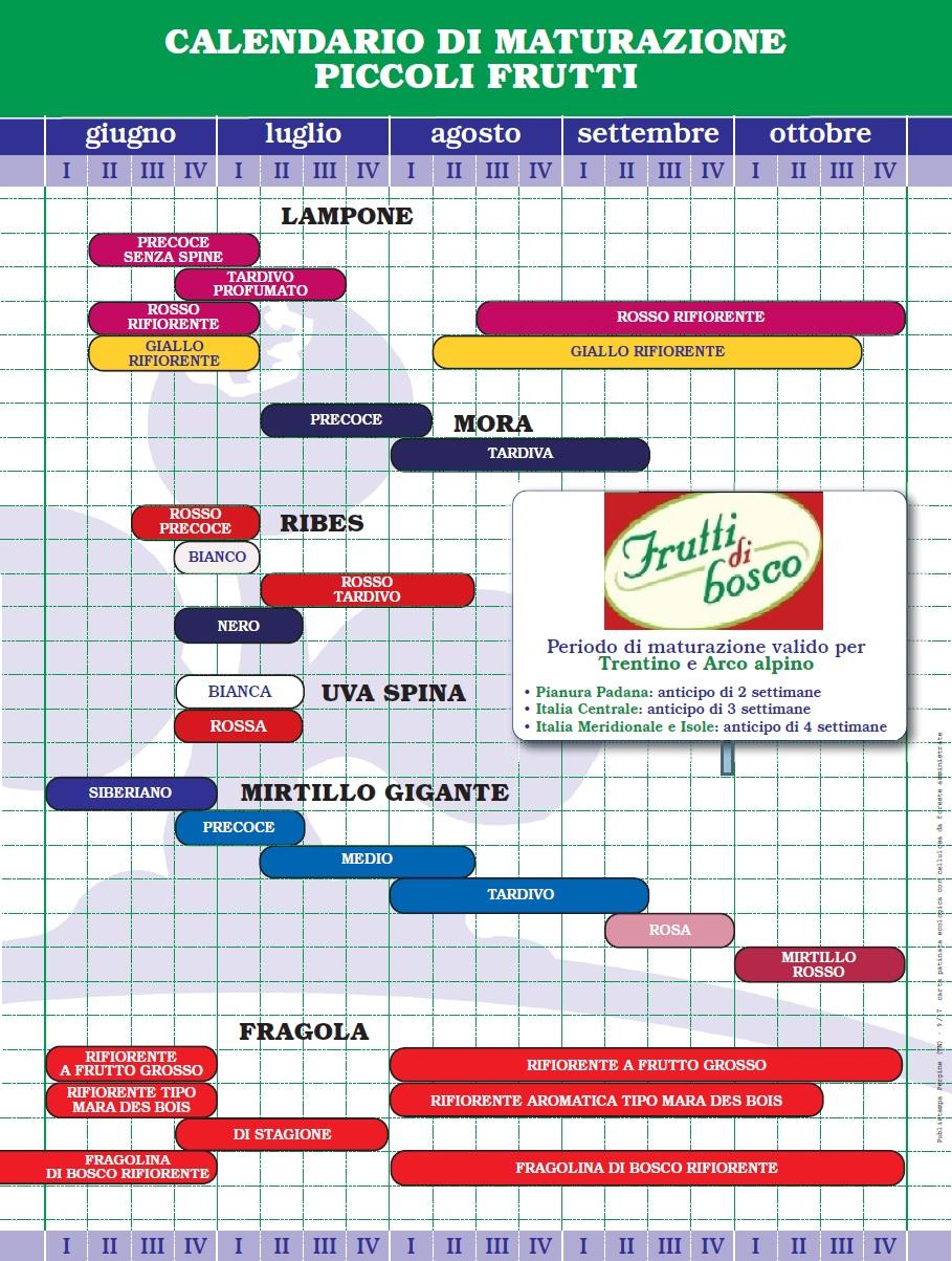 Calendario Boschi.Calendario Di Maturazione Frutti Di Bosco Www Fruttidibosco Eu