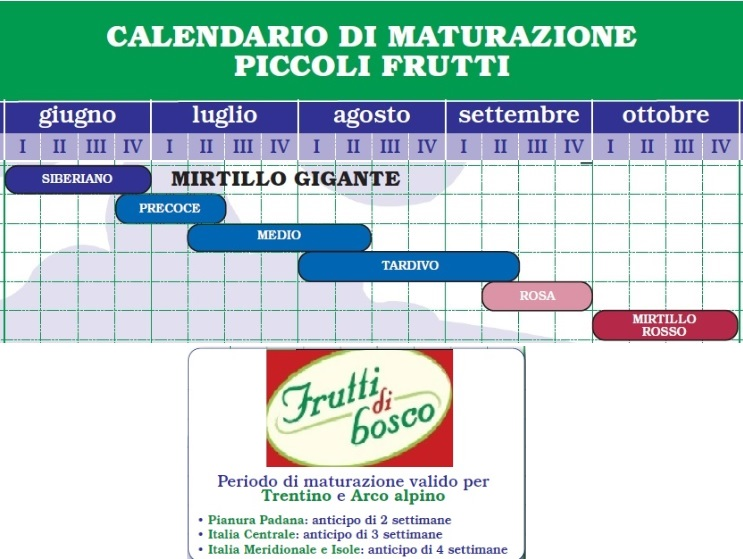 Calendario Potatura Piante.Mirtillo Calendario Maturazione Quando Raccogliere La