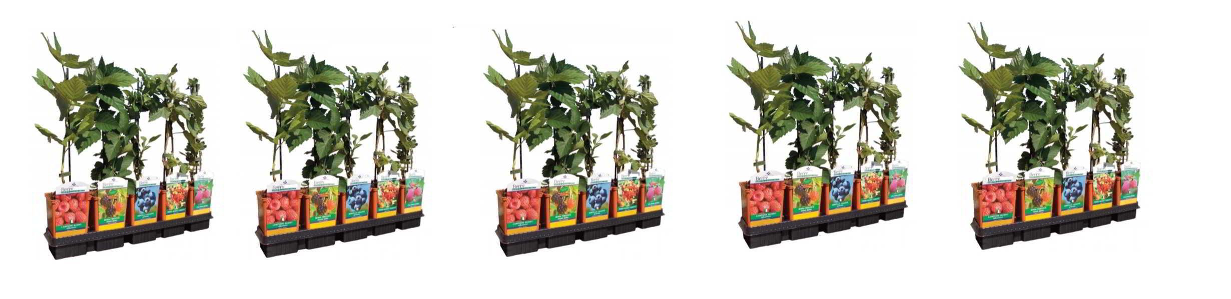 piante-in-vaso-12