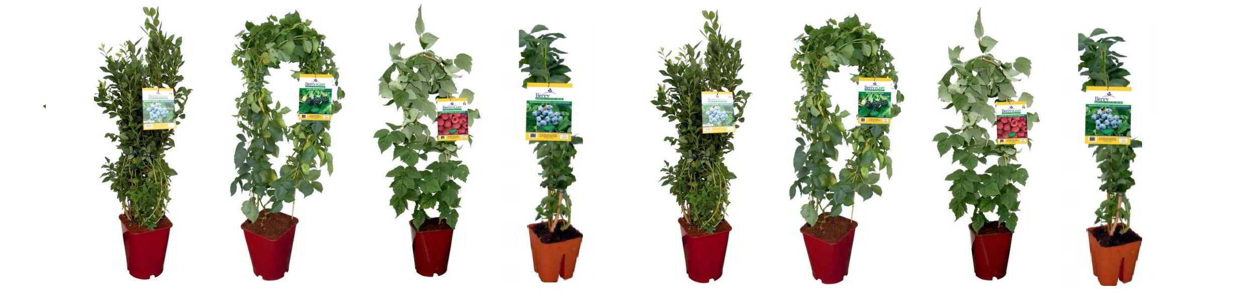 piante-in-vaso-20