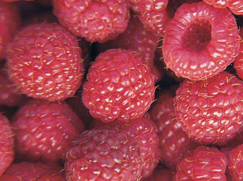 Lampone rosso rifiorente vendita pianta online - Coltivare uva da tavola in vaso ...