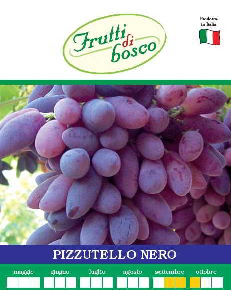 Piante uva da tavola pizzutello nero - Piante uva da tavola ...